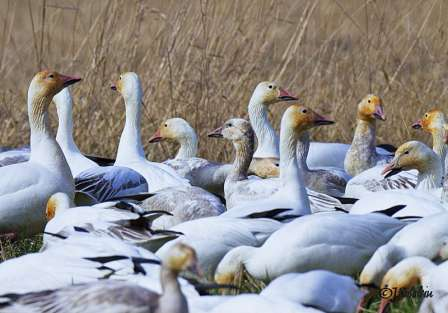 Click to view larger image